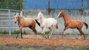 Beaux chevaux de différentes couleurs banque de vidéos