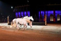 Beaux chevaux de lusitano dans l'arène de sable Photos stock