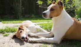 Beaux chiens heureux Photos stock