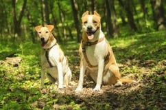 Beaux chiens heureux Images stock