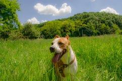 Beaux chiens heureux Image stock