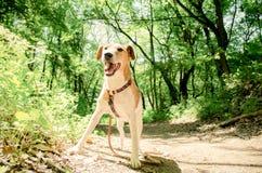 Beaux chiens heureux Photographie stock