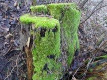 Beaux chiffres dans le tronçon d'un arbre en Finlande, ici en Scandinavie Photos libres de droits