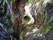 Beaux chiffres dans le tronçon d'un arbre en Finlande, ici en Scandinavie Photo libre de droits