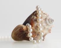 Beaux collier et interpréteur de commandes interactif de perle Images libres de droits