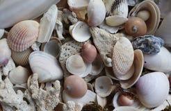 Beaux coquillages et corail dans la pile photo libre de droits