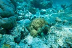 Beaux coraux Photo libre de droits