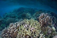 Beaux coraux renforcement de récif en Raja Ampat photos stock