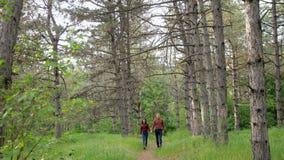Beaux couples élégants dans l'amour, marchant dans le bois, date romantique clips vidéos