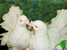 Beaux couples de colombe Photos libres de droits