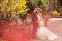 Beaux couples nuptiales Photographie stock
