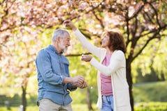 Beaux couples supérieurs en nature d'extérieur d'amour au printemps Image stock
