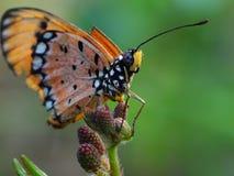 Beaux decends de papillon sur la fleur et la feuille image libre de droits