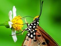 Beaux decends de papillon sur la fleur et la feuille photo stock