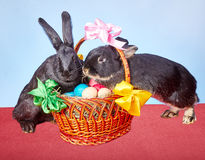 Beaux deux lapins se trouvant sur un panier avec des oeufs de pâques Photos libres de droits