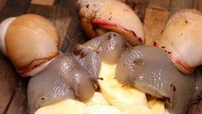 Beaux escargots mangeant une banane douce délicieuse banque de vidéos
