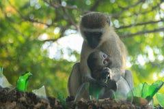 Beaux et émouvants singes de maman et de bébé Soin et amour photos stock
