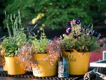 Beaux et colorés pots de fleur Photos libres de droits