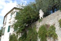 Beaux et hauts murs couverts de câpres dans une villa dans Monselice par les collines en Vénétie (Italie) Images stock