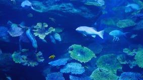 poissons exotiques dans l 39 aquarium d 39 eau douce photo stock image 38973169. Black Bedroom Furniture Sets. Home Design Ideas
