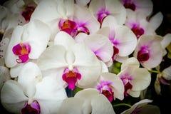 Beaux fleur d'orchidée et fond de feuilles de vert à garde photo libre de droits