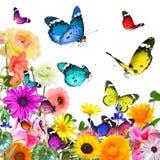Beaux fleurs et papillons colorés D'isolement sur le blanc Photographie stock