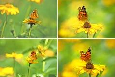 Beaux fleurs et papillons dans la fin de jardin  Photos stock