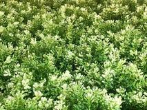 Beaux fond et texture artificiels de mur de plante verte image stock