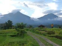 Beaux gisements de riz de Jatiluwih, Bali, Indonésie Photographie stock