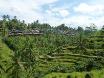 Beaux gisements de riz de Tegalalang, Bali, Indonésie Photographie stock