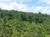 Beaux gisements de riz de Tegalalang, Bali, Indonésie Photos stock