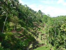 Beaux gisements de riz de Tegalalang, Bali, Indonésie Photo libre de droits