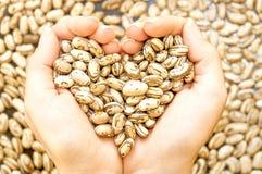 Beaux haricots Photo libre de droits