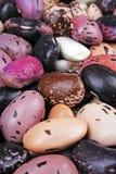 Beaux haricots mélangés comme fond Texture colorée crue de haricot Photos libres de droits
