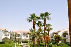 Beaux hauts palmiers du sud tropicaux verts luxuriants avec de longs troncs et branches et feuilles luxuriantes contre le context Image stock