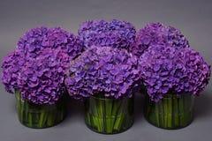 Beaux hortensias de violette de fleur Image libre de droits
