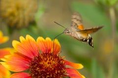 Beaux insectes et fleurs Image libre de droits