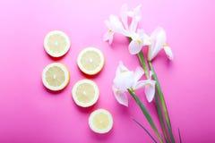 Beaux iris et tranches de citron sur le fond rose Photographie stock libre de droits