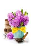 Beaux jacinthes et outils de jardin Photo stock