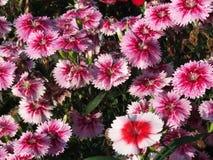 Beaux jardin d'agrément et fleur images stock