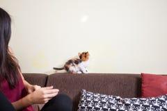 Beaux jeunes couples magnifiques tenant des chats dans des mains Photos stock
