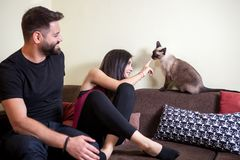 Beaux jeunes couples magnifiques tenant des chats dans des mains Image stock