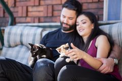 Beaux jeunes couples magnifiques tenant des chats dans des mains Photo libre de droits