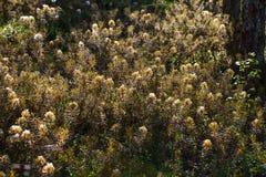 Beaux labradors d'un marais s'élevant dans l'habitat naturel de marais Paysage de marécage avec la fleur de ressort Images libres de droits