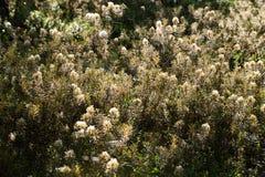 Beaux labradors d'un marais s'élevant dans l'habitat naturel de marais Paysage de marécage avec la fleur de ressort Photographie stock
