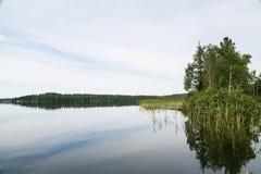 Beaux lacs sibériens Beaucoup jonc Lac Tagasuk Images libres de droits