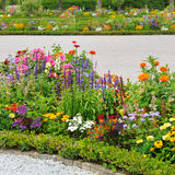 Beaux lits de fleur Image stock