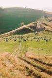 Beaux ménages mariés près du troupeau de moutons sur le beau pré de montagne, plan global Photos stock