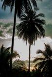 Beaux matins avec les nuages et les arbres de noix de coco légers Image stock