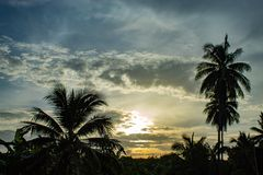 Beaux matins avec les nuages et les arbres de noix de coco légers Image libre de droits